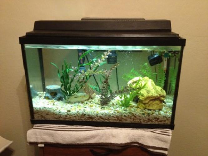 125 obo 29 gallon fish tank for sale in phoenix arizona for 125 gallon fish tank