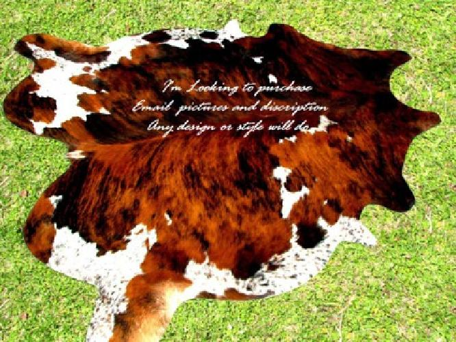 150 Obo Looking To Buy Cow Hide Rug To Hang On Wall For