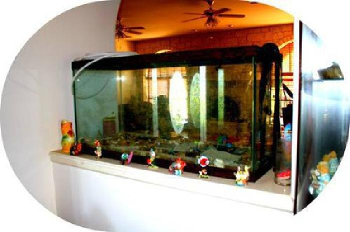 250 100 Gallon Fish Tank Comes With All Equipment