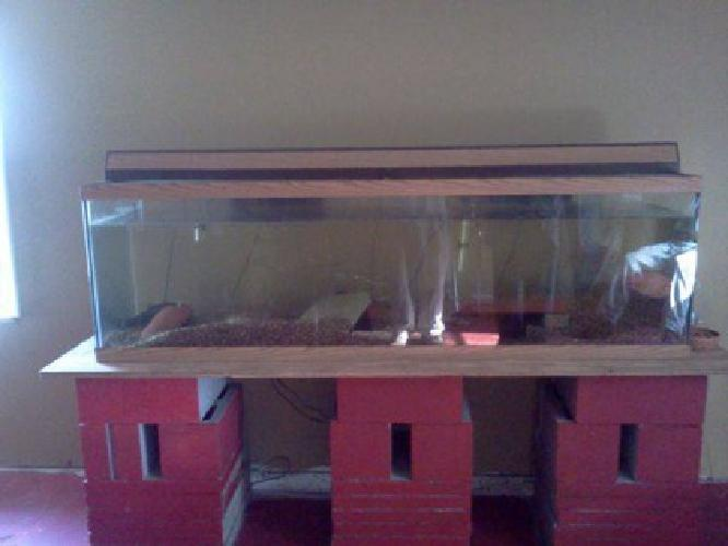 300 150 gallon fish tank for sale for sale in new orleans for 300 gallon fish tank for sale