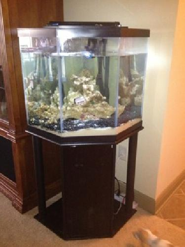 Aquarium for sale jacksonville fl vision for aquarium to for 50 gallon fish tank