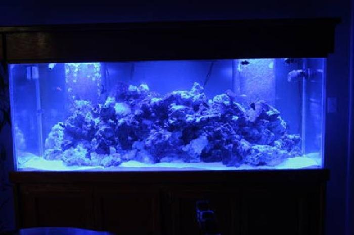 3 000 220 gallon fish tank for sale in miami florida for 220 gallon fish tank
