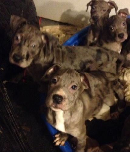 ***3 Month Old Designer Breed Puppies