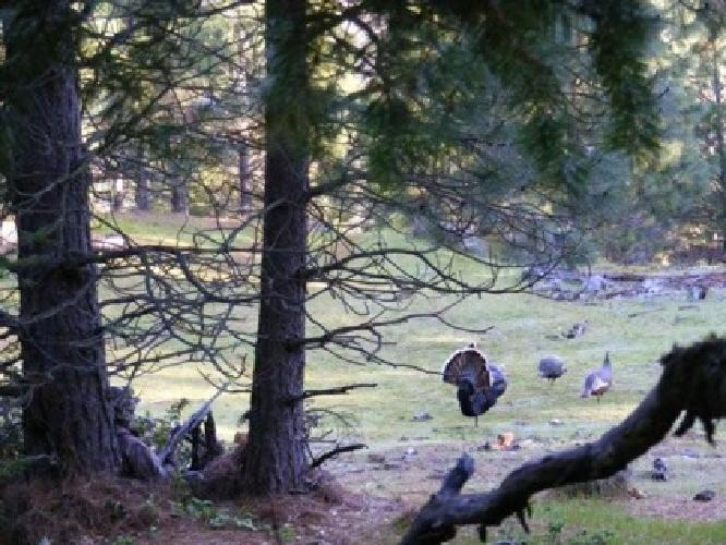 $50 Hunting Seminar How to call Turkeys
