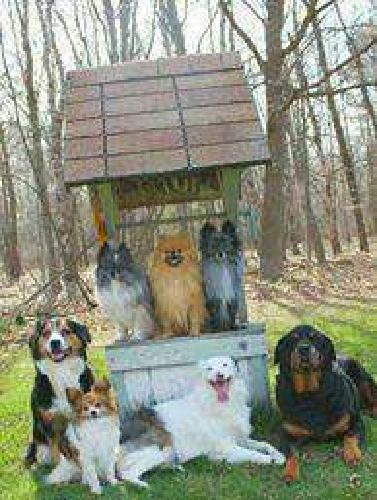Dog Training Classes In Clare ALSO In Home Dog Training