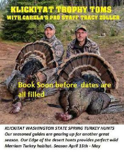 Guided Spring Turkey Hunt And Lodging