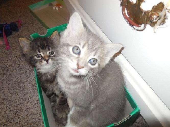 Two litters of kittens